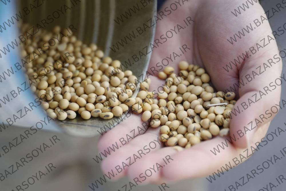 فروش دانه سویا به صورت عمده و جزئی