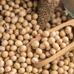 فروش عمده دانه سویا داخلی | بازار خرید لوبیا سویا